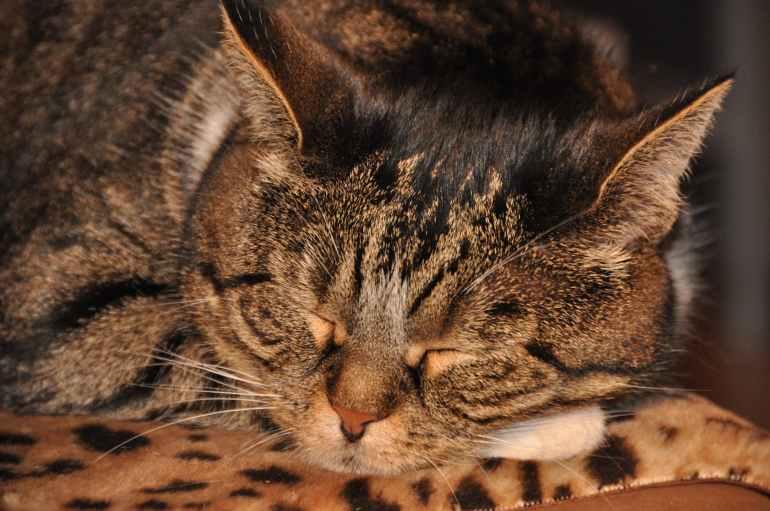 animal cat close up cute